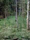 Romincka森林beautifull,波兰的狂放的部分 免版税库存照片