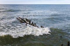 Rompeolas alemán viejo en la costa de mar Báltico Imagen de archivo