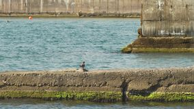 Rompeolas en el Mar Negro 4k, cámara lenta almacen de video