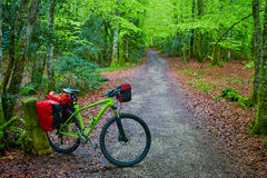 Roncesvalles beech begin Way of Sain James bike Stock Images