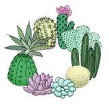 Rondò stabilito del cactus succulente Posto per testo agave, aloe, gastraea, echeveria, Pachyphytum, Immagini Stock
