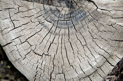 Rond besnoeiingshout Stock Fotografie