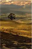 Rond Blanefield - Schotland Stock Afbeeldingen