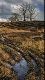 Rond Blanefield - Schotland Royalty-vrije Stock Foto