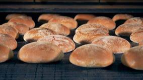 Rond brood op een lijn Het brood op een speciale installatie wordt gebakken gaat op een transportband die stock footage