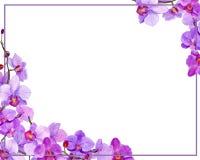 ` Rond d'orchidée de ` de cadre d'aquarelle Image libre de droits