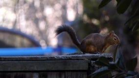 Rond en eekhoorn die eruit zien spreken stock videobeelden