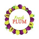 Rond gekleurd die kader uit heerlijk pruimfruit wordt samengesteld Vectorkaartillustratie cirkel Purpere verse pruimenvruchten Royalty-vrije Stock Foto's