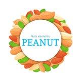 Rond gekleurd die kader uit pindanoot wordt samengesteld Vectorkaartillustratie Cirkelnoten, aardnootfruit in geheel shell, Royalty-vrije Stock Foto