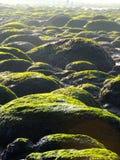 Rond gemaakte bestratingskeien op Hunstanton-strand Royalty-vrije Stock Foto's