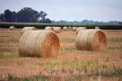 Rond Hay Bails op Gebied Stock Foto