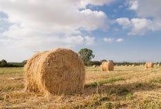 Rond Hay Bales op een gebied in Athalassa-park, Eiland Cyprus Stock Foto's