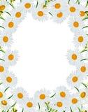 Rond kader van bloemen Stock Fotografie