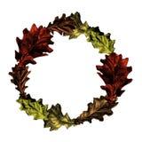 Rond kader van eiken bladeren Stock Afbeelding