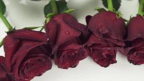 Rond kader van rode rozen met waterdruppeltjes op de witte video van de achtergrondvoorraadlengte stock videobeelden