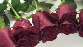 Rond kader van rode rozen met waterdruppeltjes op de witte video van de achtergrondvoorraadlengte stock footage