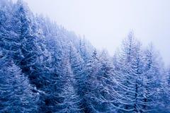 Rond Kerstmistijd: de winterscène in de Zwitserse alpiene berg stock afbeelding
