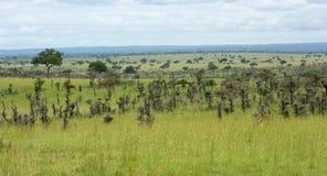 Rond Murchison-Dalingen Nationaal Park stock foto's