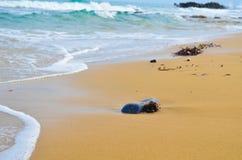 Rond steen en zeewier op het zandige strand stock afbeeldingen