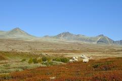 Rondane Stock Images