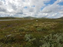 Rondane Nationalpark stockbilder