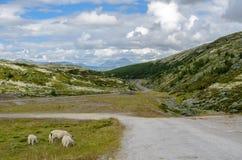 Rondane Nationalpark lizenzfreie stockfotos