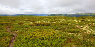 Rondane Norway Stock Photos