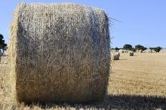 Ronde balen van stro in de weide Stock Foto's