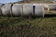 Ronde balen van stro en hooi Stock Afbeeldingen