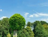Ronde bomen en blauwe hemel Stock Afbeeldingen