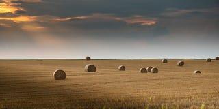Ronde bundels van droog gras op het gebied, balen van hooi stock afbeelding