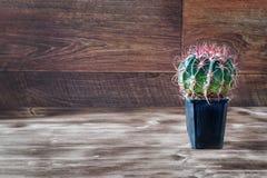 Ronde cactus met brede rode doornen in zwarte pot op donkere houten uitstekende achtergrond De ruimte van het exemplaar royalty-vrije stock foto's