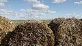 Ronde hooibalen op het groene gebied op Rusland stock videobeelden