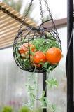 Ronde metaal gevormde mand met kunstmatige mandarins in de tuin Royalty-vrije Stock Afbeelding