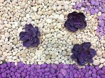Ronde stenen en bloempurple en wit Royalty-vrije Stock Fotografie