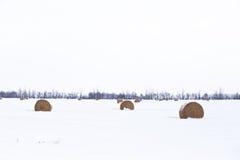 Ronde strobalen in de winter Stock Foto
