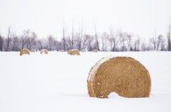 Ronde strobalen in de winter Royalty-vrije Stock Afbeeldingen