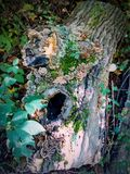 Rondin avec de la mousse et des champignons Photo libre de droits