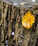 Rondin coupé d'arbre avec la feuille d'or d'automne Photos libres de droits