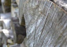 Rondin coupé vieux par gris montrant des anneaux de croissance photo libre de droits