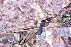 Rondin d'arbre de corde de crochet de chaîne de poulie coupée de remorquage Photographie stock