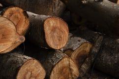Rondin de bois de construction Photos stock