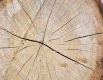 Rondin de chêne Image libre de droits