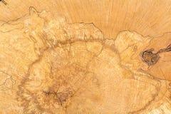 Rondin de la texture en bois Image libre de droits