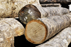 Rondin en bois image stock