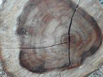 Rondin en bois d'un arbre de tronçon images stock