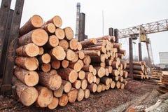 Rondin en bois de scierie photographie stock libre de droits