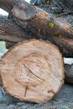Rondin en bois et jeunes plantes vertes sur un tronçon d'arbre Concept neuf de durée Photo stock