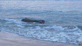 Rondin en bois lavé à terre par les vagues de mer Beau paysage marin clips vidéos