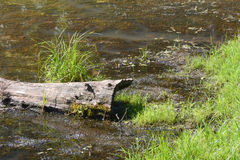 Rondin et herbe Photo libre de droits